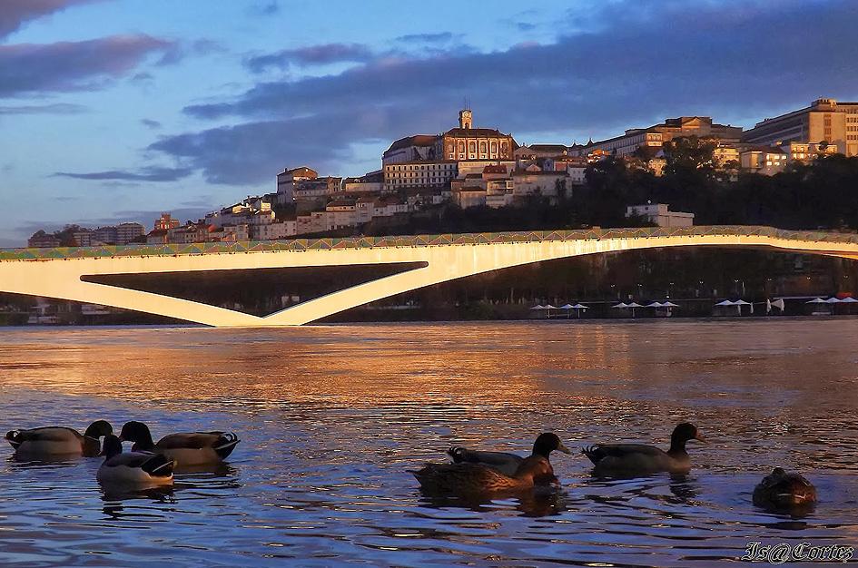 web-Coimbra-por-Isa-Cortez